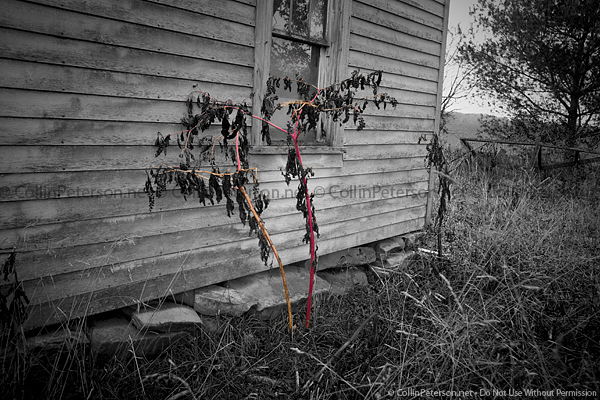 Abandoned House - Pink and Dying