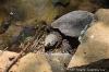 img_3147-090427-cc-turtle.jpg